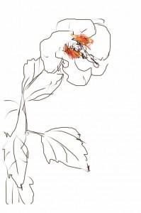 東京下町スケッチ「芙蓉の花」